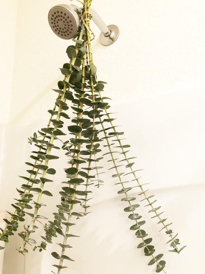 eucalyptus leaves in shower